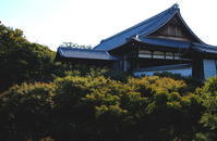 ぶらり京都一人旅その3 - 自然がいっぱい3