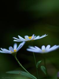 秋深まる - M2_pictlog
