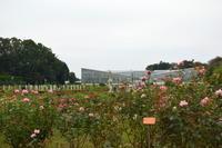 Garden Storyに~秋バラが咲き誇る都内のバラ園「神代植物公園」~がアップされました。 - 元木はるみのバラとハーブのある暮らし・Salon de Roses