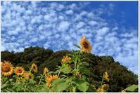 11月の花といえば? - ハチミツの海を渡る風の音