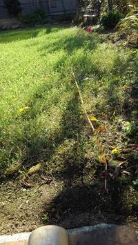 クラピア端切り、草取り - うちの庭の備忘録 green's garden
