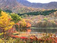 下郷町観音沼森林公園  沼に映える色づいた木々 - C* 日和