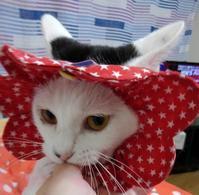 サムガリ~タ - 素人木工雑貨と犬猫日記
