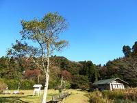 カモが来ました/寒い季節が始まります - 千葉県いすみ環境と文化のさとセンター
