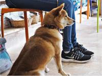犬のしつけ方教室11/1 - SUPER DOGS blog