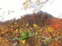 天水山はブナ黄葉真っ盛り2018.10.28(日) - 心のまま、足の向くまま・・・