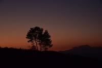 花の丘から - 光画日記