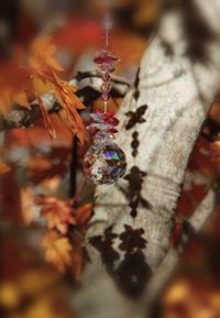 秋はいいなぁ〜〜 - 虹を浴びる