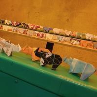 金沢動物園のクロサイ 2018.11.01 - ごきげんよう 犀たち