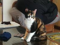 三毛猫ひかちゃん-78- - 殿様の試写室