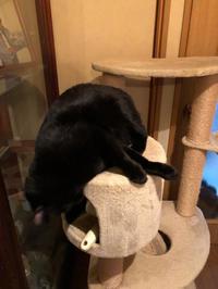 黒い毛 - 愛犬家の猫日記