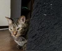 なんかなぁ - キジトラ猫のトラちゃんダイアリー