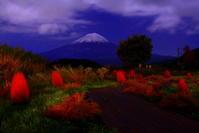 30年10月の富士(11)コキアと富士 - 富士への散歩道 ~撮影記~