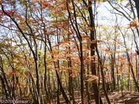 Mt. Ohmochi and Unotawa in Oku-musashi - Hike in and around Tokyo