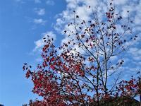 秋日和 - 老いの小文