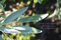 落花生の最後の収穫に。 - 暮らしごと - 雨の日と休日には。
