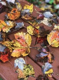 秋雨の落葉 - 幾星霜
