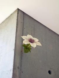 ヴァンジ彫刻庭園美術館須田悦弘ミテクレマチス展 - 野崎哲郎建築設計事務所 のblog
