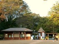来年に乞うご期待〜森林公園の羽毛ケイトウ - 黄色い電車に乗せて…