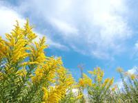 泡立草に寄せる - いつかみたソラ