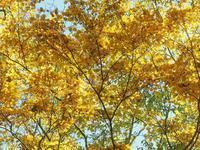 赤城大沼の紅葉2 - 光の音色を聞きながら Ⅳ