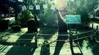 円山動物園~ホッキョクグマ館 - Sorekara・・・