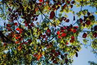 秋色鮮やか - 彩りの軌跡
