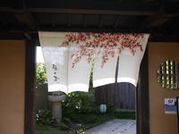 (金沢・戸水)梅の花金沢店 - 松下ルミコと見る景色