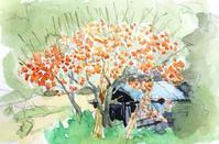 柿の木畑 - ryuuの手習い