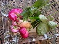薔薇の湿度 - LilyのSweet Style