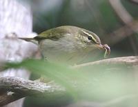 夏の居残り組 - ゆるゆる野鳥観察日記
