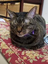 こうばこ座り - キジトラ猫のトラちゃんダイアリー
