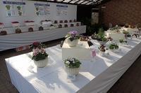 「秋のセントポーリア展」開催中! - 手柄山温室植物園ブログ 『山の上から花だより』