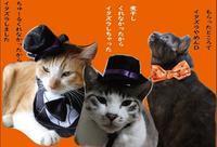 Thecat's - ぎんネコ☆はうす