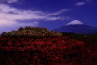 30年10月の富士(12)大石公園花街道の富士 - 富士への散歩道 ~撮影記~
