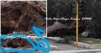 """""""ローマ市内も「大木に近づくな!」私からみなさんへの注意♪"""" ~ イタリア各地悪天候、引き続き注意! ~ - 「ROMA」在旅写ライターKasumiの 最新!ローマ ふぉとぶろぐ♪"""