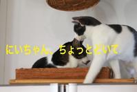にゃんこ劇場「冷蔵庫覇権戦争」 - ゆきなそう  猫とガーデニングの日記
