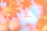 八ヶ岳倶楽部(山梨県北杜市) - Photographie de la couleur