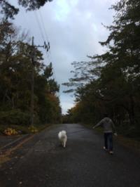 2018年10月鳥取大山旅行④狗賓の朝 - 龍眼日記  Longan Diary