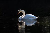 白鳥は悲しからずや牧水さん - スポック艦長のPhoto Diary