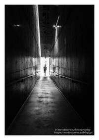 宿命を背負い - ♉ mototaurus photography