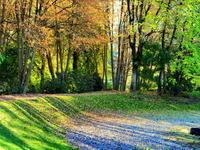 木の影 - 花散歩写真 in Vancouver