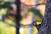 秋の公園 - momo*photo
