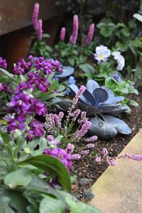 東側花壇の様子 - 小さな庭 2