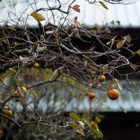 秋のかまくら散歩英勝寺 - スナップ寅さんの「日々是口実」
