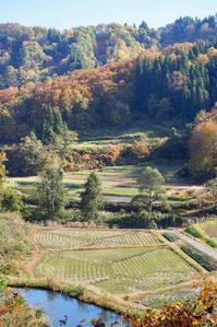 紅葉の棚田 - 松之山の四季2
