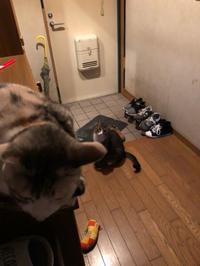 英世ちゃんフタリと紅葉狩りへ - 愛犬家の猫日記