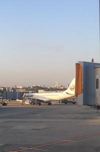 JAL104便で東京・羽田へ - ハチドリのブラジル・サンパウロ(時々日本)日記