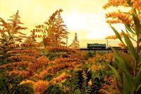 黄色い朝 - 今日も丹後鉄道