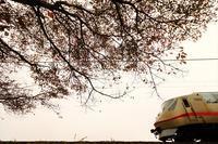 桜とエクスプローラー - 今日も丹後鉄道
